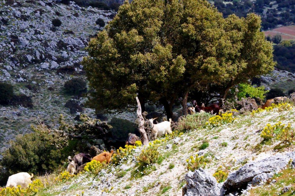 Góra Ainos