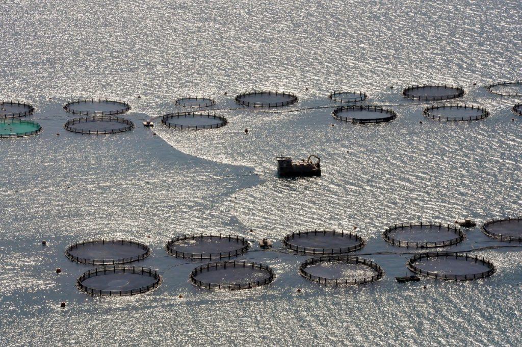 Lixouri łowiska