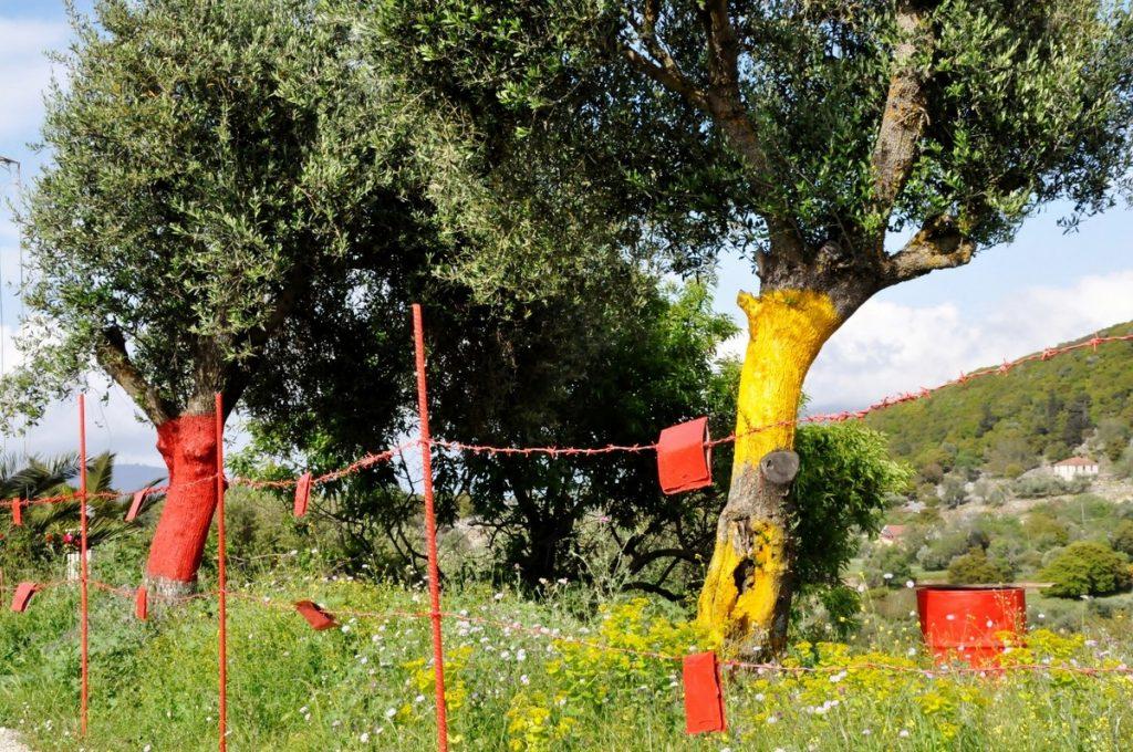 Na trasie w sadach każde drzewko było pomalowane innym kolorem