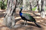 Plaka Forest - pawi raj na wyspie Kos
